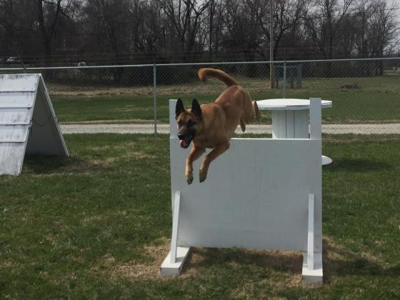 Kentuckiana K-9 Dog Training & Boarding Center