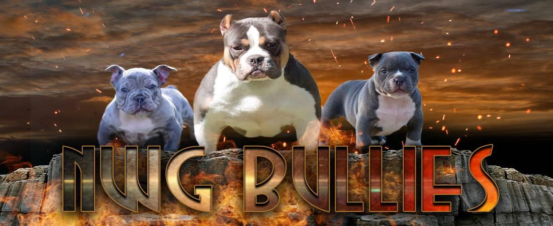 NWG Bullies - Tri color American Bullies | Trion, Georgia