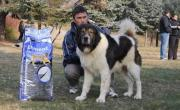 Karakachan Dog (Bulgarian Shepherd)